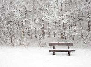 Christmas Snow on Bench